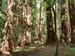 John Muir Woods Park