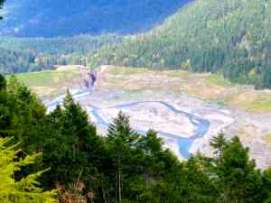 The recovery of the Elwha valley