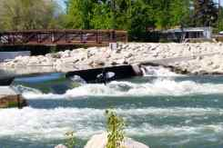 Two surfers in the Boise River