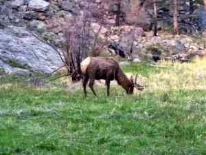 While Hiking along the trail, we saw many elk, one of which blocked our trail