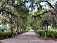 A pathway to the big fountain in Forsyth Park